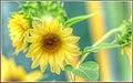 Bee Banquet (119302397).jpeg