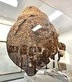 Bee Museum, large hornet's nest.jpg