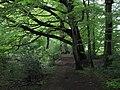 Beech Grove - geograph.org.uk - 1310801.jpg