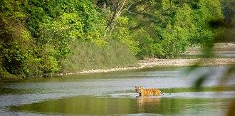 Bardiya National Park - Image: Bengal Tiger Bardiya