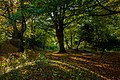 Beverley Westwood IMG 7810 - panoramio.jpg