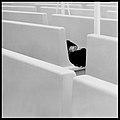 Bianco e nero 1983 - foto Augusto De Luca. 9.jpg