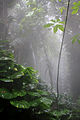Biosphere2 Rain Forest Biome.jpg