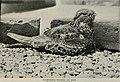 Bird-lore (1914) (14752179391).jpg