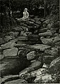 Bird-lore (1915) (14755085572).jpg