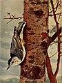 Bird neighbors (1903) (19761058604).jpg
