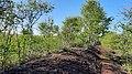 Birken auf Torfbank - FFH-Gebiet Tarbeker Moor.jpg