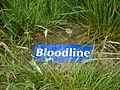 Bloodline (6896059763).jpg