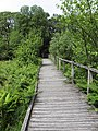 Boardwalk near Dolgoch Falls - panoramio.jpg