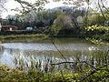Bois de Colfontaine0005.JPG