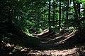 Bois du Pottelberg - Pottelbergbos 01.jpg