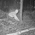 Bosbewerking, arbeiders, boomstammen, gereedschappen, zagen, Bestanddeelnr 251-9133.jpg