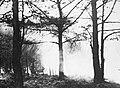 Bosbouw, bosbrand, Bestanddeelnr 193-0425.jpg
