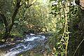 Bosque - Bertamirans - Rio Sar - 013.JPG