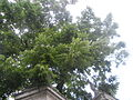 Botanička bašta Jevremovac 021.JPG