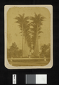 Botanical Garden- Avenue of Imperial Palms WDL1619.png