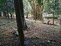 Botanical Garden in Putrajaya, Malaysia 47.jpg