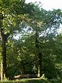 Botanical garden in zugdidi(05).jpg