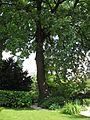 Botanische tuin - Sofia (4759500189).jpg