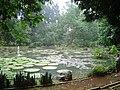Botanischer Garten in Bogor.jpg