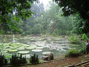 Caspar Georg Carl Reinwardt -  Photograph of Lily pond and fountain at the Bogor Botanical Gardens, 2014