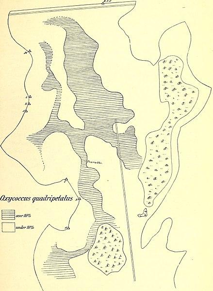 File:Botanisk tidsskrift (1916) (20219283809).jpg