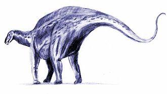 Diplodocoidea - Image: Brachytrachelopan BW