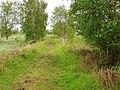 Brackagh Moss - geograph.org.uk - 1327988.jpg