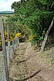 Brackmont Path - geograph.org.uk - 175130.jpg