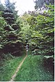 Bridleway Through Hacking Copse. - geograph.org.uk - 195799.jpg