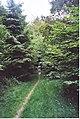 Bridleway Through Hacking Copse. - geograph.org.uk - 195799.jpg