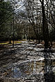 Bridleway at Gernon Bushes Nature Reserve, Coopersale Essex England - tree reflections.jpg