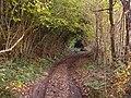 Bridleway beside Glan-Frogan Woods - geograph.org.uk - 601535.jpg