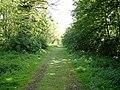 Bridleway through Shrubland Park - geograph.org.uk - 1277897.jpg