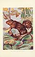 British mammals (6358187131).jpg