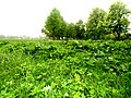 Brody, Lviv Oblast, Ukraine - panoramio (261).jpg