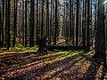 Bruderwald Bamberg-20191107-RM-105905.jpg