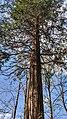 Buchenbach Baum 20190418 174225.jpg