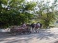 Bull cart (205562727).jpg