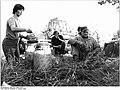 Bundesarchiv Bild 183-T0803-0020, KAP Roggendorf, Ernte, Verpflegung.jpg