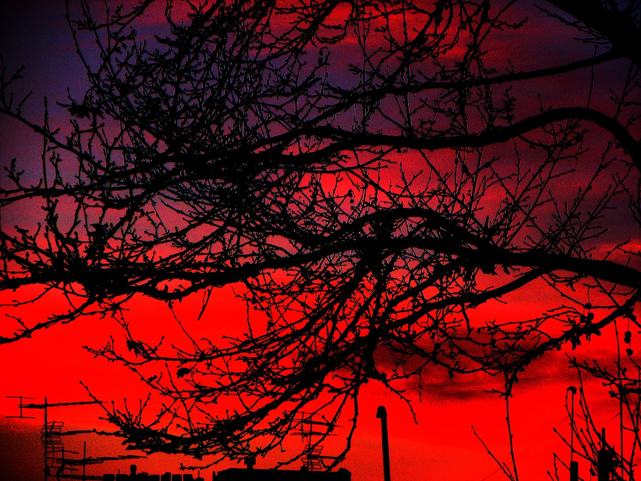 Burning Sky of Tehran after 2 days heavy Snow, March 5, 2011 - panoramio.jpg