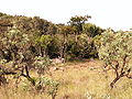 Bushveld.jpg