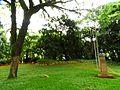 Busto do Prefeito Firmiano Pinto 34.jpg