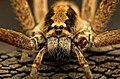 C1 Spider 20-7818.jpg