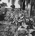 COLLECTIE TROPENMUSEUM Tabaksaanplant van de lokale bevolking in de regio Plateaux TMnr 20008000.jpg