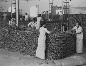 Women making huge heaps of dried tobacco-leave...