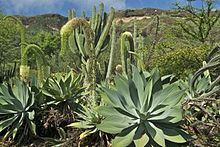 Merveilleux Koko Crater Botanical Garden