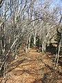 Camí a la Serra de Cabrera (febrer 2011) - panoramio - EliziR.jpg