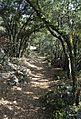 Camí amb bosc cap a la Mola Remígia, Ares del Maestrat.JPG