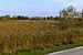 Camargue Parc naturel régional.jpg